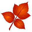Stock Photo: Leaf of raspberry, vector