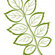 Leaf of dogrose, vector — Stock Photo