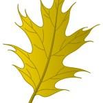 Leaf of an autumn oak Iberian — Stock Photo #12014155
