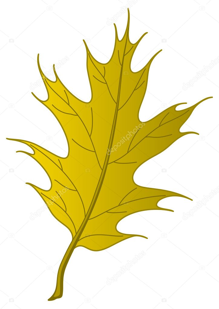 Leaf of an autumn tree oak Iberian, nature object, isolated  Stock Photo #12014155