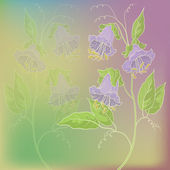 Flowers kobe on green and lilac background — Stock Photo