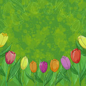 Flowers tulips on green background — Stock Photo