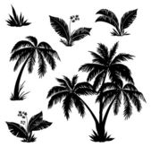 Palm trees, flowers and grass, silhouettes — Stok Vektör