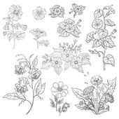 Flowers, set, outline — Stock Photo