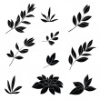 Leaves, black silhouettes — Stock Photo