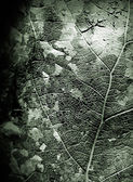 Dead leaf monochrome closeup texture — Stock Photo