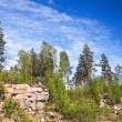 Paludal mixed forest in Karelia, Russia — Stock Photo