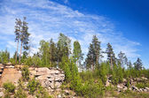 Paludal mixed forest in Karelia, Russia — Stockfoto