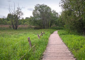 Old planked footway in the park — Stock Photo