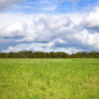 Cloudy sky over bright green meadow — Stock Photo