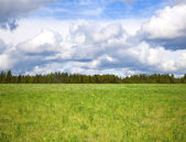 Cloudy sky over bright green meadow — ストック写真