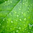Leaf and drops of water on it — Stock Photo