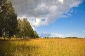 Russian rural landscape — Stock Photo