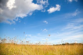 Rural landscape with dry field under beautiful cloudy sky — Stock Photo