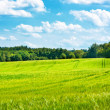 Barley fields undulating in middle of woods — Stock Photo #12196142