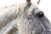 At kafası — Stok fotoğraf