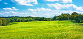Barley fields undulating in the middle of woods — Stock Photo