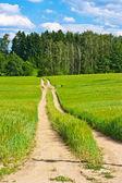 Barleycorn field and road — Stock Photo