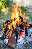 Campfire in nature — Stock Photo