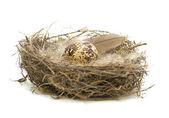 Egg in a nest on a white background — Stock Photo
