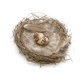 Eggs in the nest. view from the top. — Stock Photo