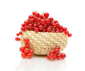 Basket with red currant on white background — Foto de Stock