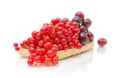 Red currant and black cherry on a white background — 图库照片