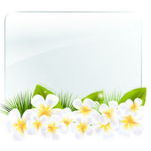 Glass Frame With Frangipani — Stock Vector