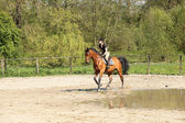 Beautiful equestrienne on brown horse in summer — Foto Stock