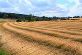 Fields of flax harvested drawing lines on the floor — Stock Photo