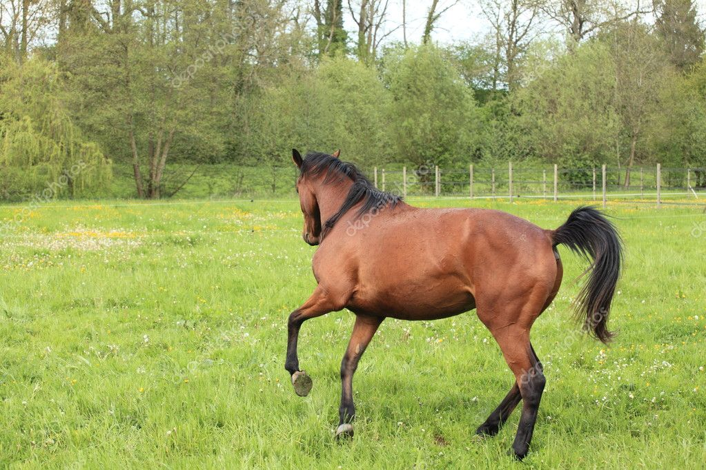Horse galloping in a meadow in spring — Stock Photo #11971317