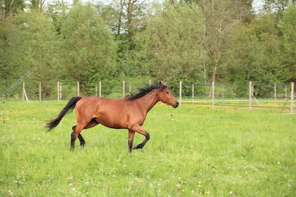 Horse galloping in a meadow in spring — Stock Photo #11971365