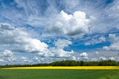 Field of rapeseeds — Fotografia Stock