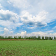 Royalty-Free Stock Photo: Green spring field under dramatic sky
