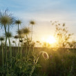 Sunset over meadow with flowers - Foto Stock