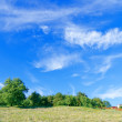 Summer landscape of green forest with bright blue sky — Stok fotoğraf