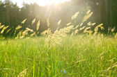 Meadow in forest. soft focus — Stock Photo