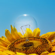 Old light bulb and sunflower — Stock Photo
