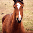 Young wild horse - Photo