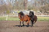 Two horses playing tag — Stock Photo