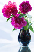 Peonies in a Vase DSC_0022_868A.JPG — Stock Photo