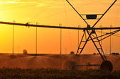 Agricultural Irrigation Sprinkler — Stock Photo