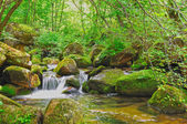 Stream in the forest — Stock Photo