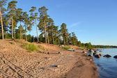 Pine forest on the shores of Lake Ladoga — Stock Photo