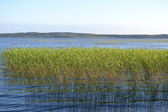 Kavgolovskoe lake — Stock Photo