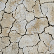 Cracking earth — Stock Photo