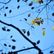 Stock Photo: Leaf in autumn time