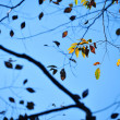 Leaf in autumn time — Stock Photo