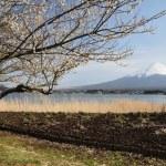 Mt. Fuji — Stock Photo