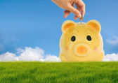 Drop coin in the saving pig bank — Stock Photo